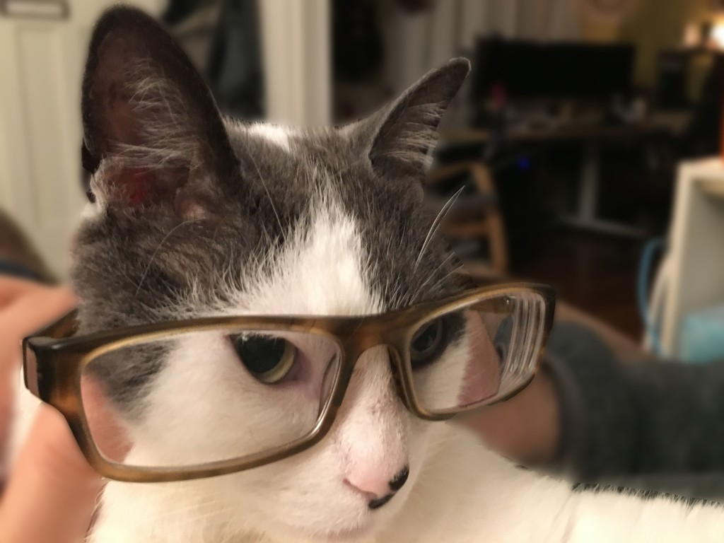 cats look smarter wearing glasses