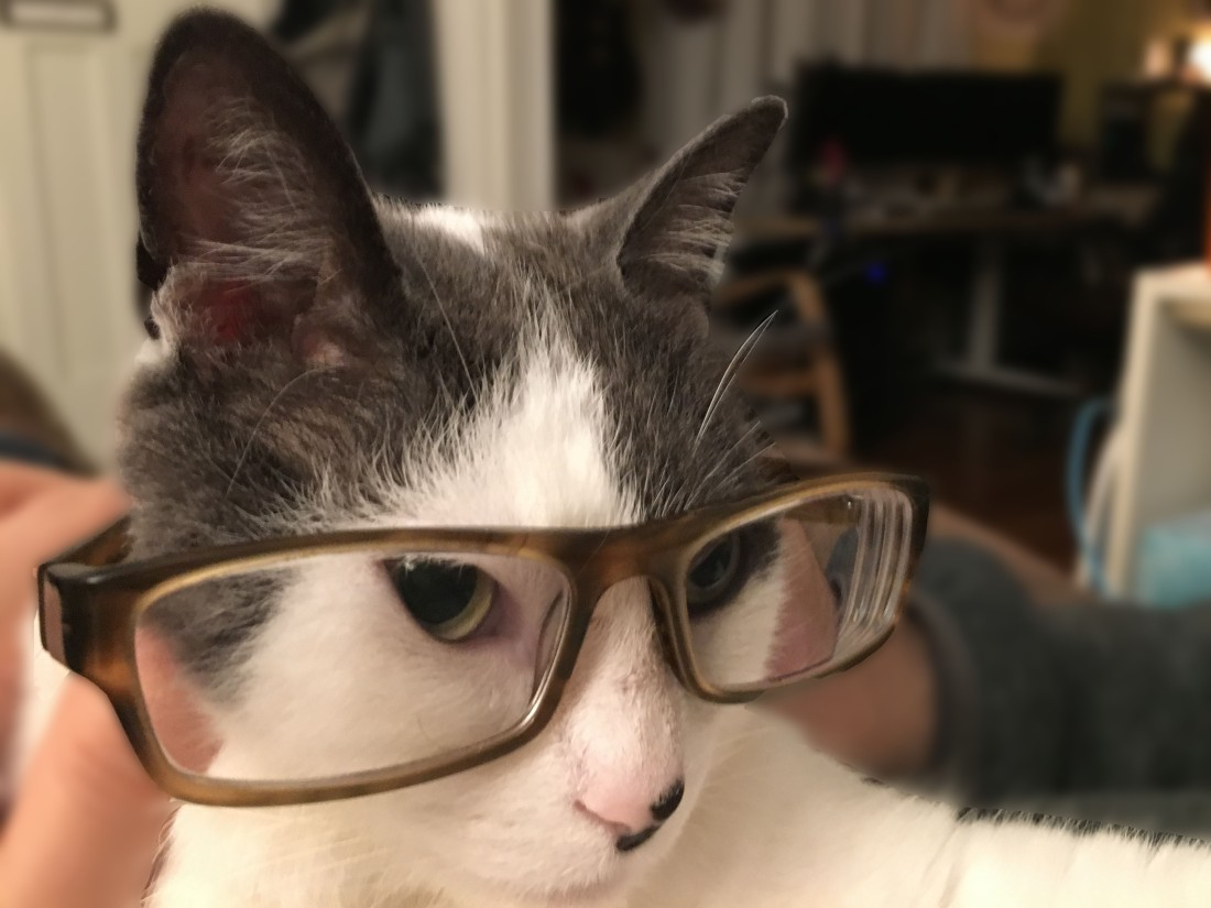 cats look smarter in glasses